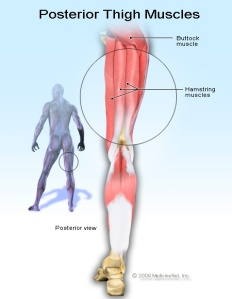 Hamstring Muscles Anatomy http://images.medicinenet.com/images/illustrations/hamstring_muscles.jpg